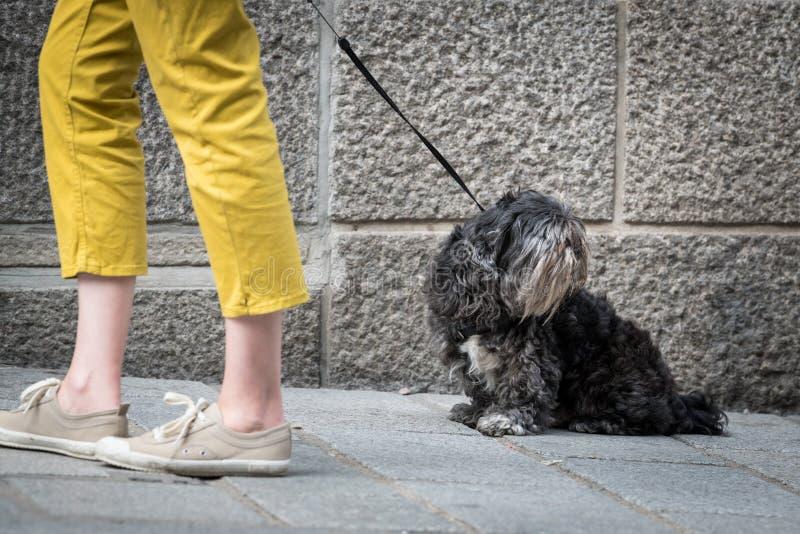 Un piccolo cane nero sveglio sulla via fotografia stock libera da diritti
