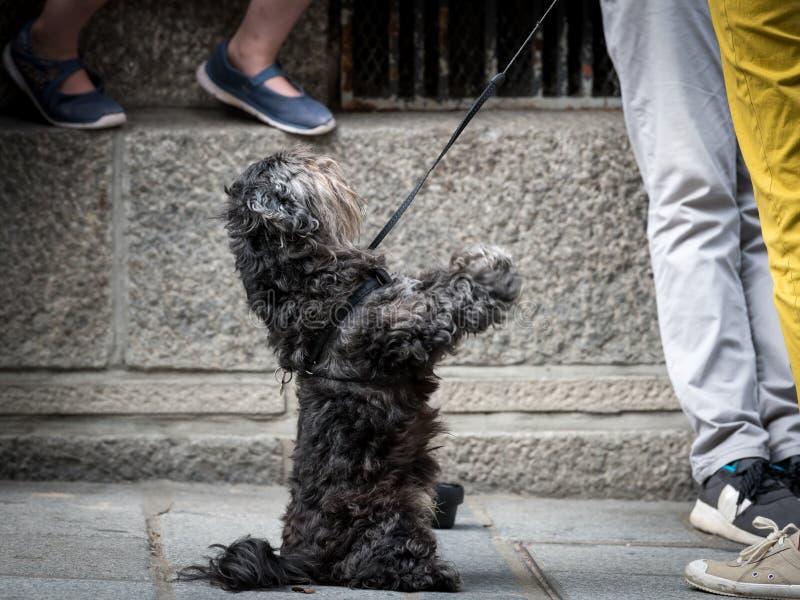 Un piccolo cane nero sveglio sulla via immagini stock