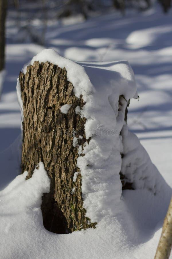 Un piccolo ceppo con un cappuccio della neve nella foresta fotografia stock libera da diritti