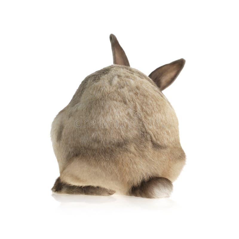 Un piccolo coniglio ci che gira la sua parte posteriore fotografie stock