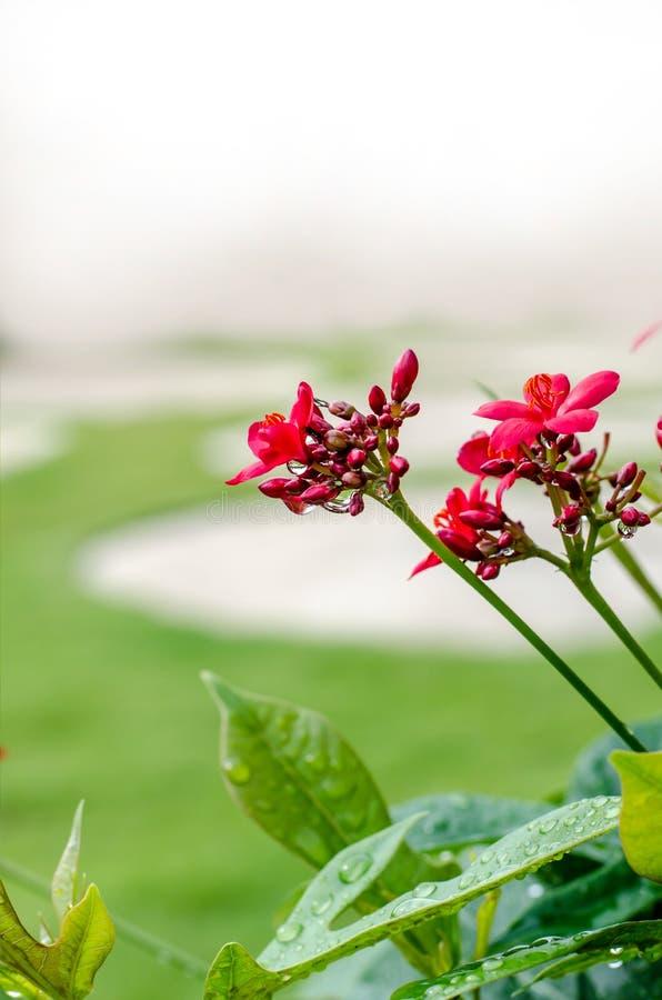Un piccolo fiore selvaggio immagini stock libere da diritti