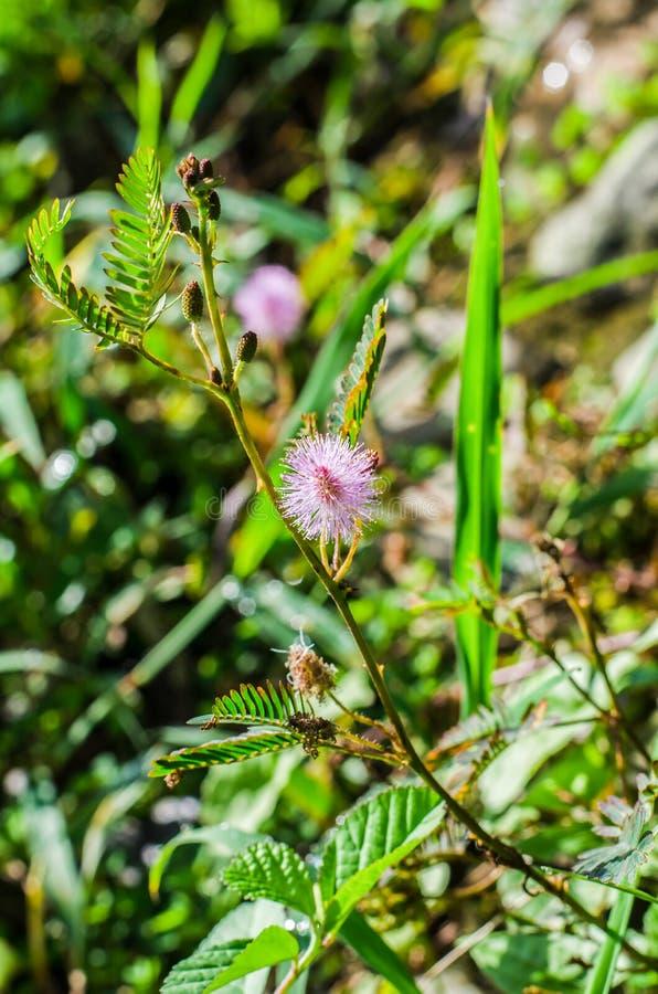 Un piccolo fiore selvaggio fotografie stock