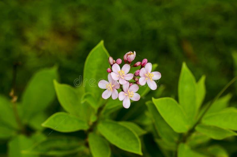 Un piccolo fiore selvaggio immagine stock libera da diritti