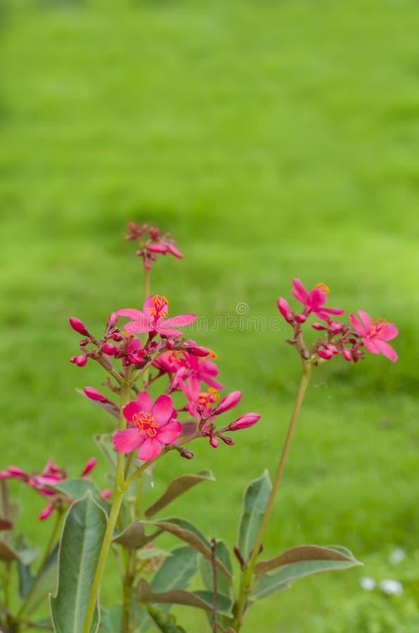 Un piccolo fiore selvaggio fotografie stock libere da diritti