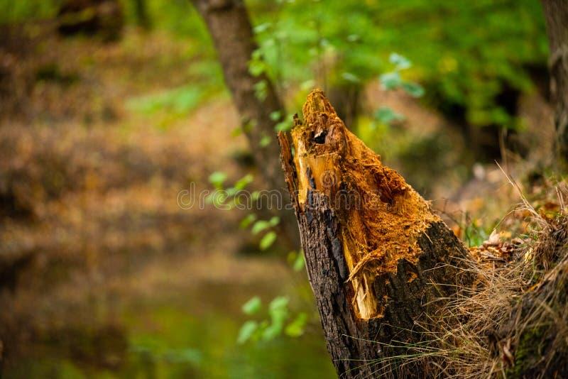 Un piccolo fiume vicino al villaggio Hude fotografie stock libere da diritti