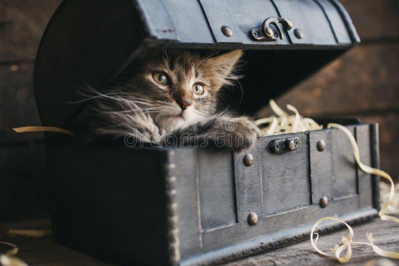Un piccolo, gattino lanuginoso che si trova in una scatola immagine stock