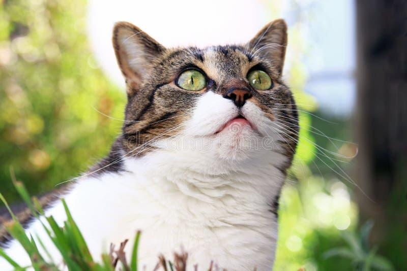 Un piccolo gatto guarda stranamente ascendente fotografia stock libera da diritti