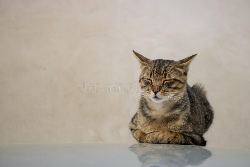 Un piccolo gatto riposa immagine stock