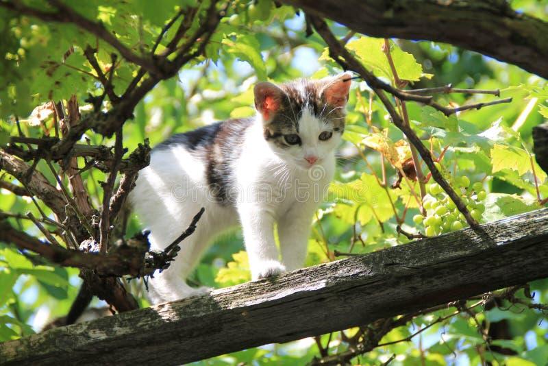 Un piccolo gatto in un albero fotografia stock