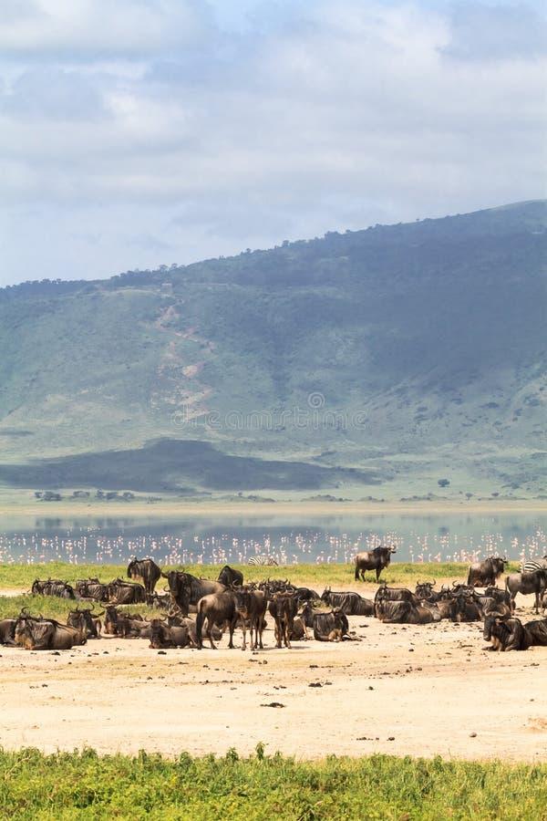 Un piccolo lago dentro il cratere Ngorongoro, Tanzania l'africa immagini stock libere da diritti