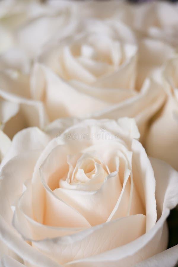 Un piccolo mazzo delle rose rosa-chiaro fotografie stock