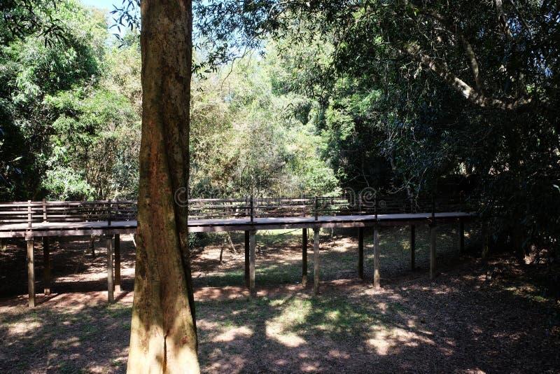 Un piccolo ponte di legno sopra il letto di un fiume inaridito nella giungla Tronco di albero Ombre degli alberi sulla terra fotografie stock libere da diritti