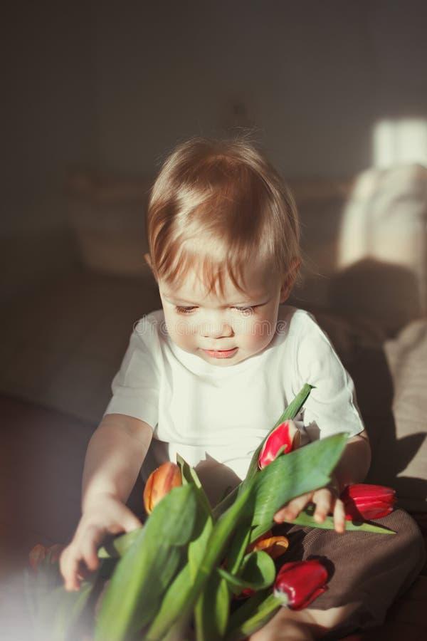 Un piccolo ragazzo sveglio tiene nelle sue mani e nell'esame del fiore rosso del tulipano Abbagliamento di Sun nel telaio Combina immagini stock libere da diritti