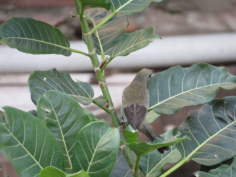 Un piccolo uccello sui rami immagini stock