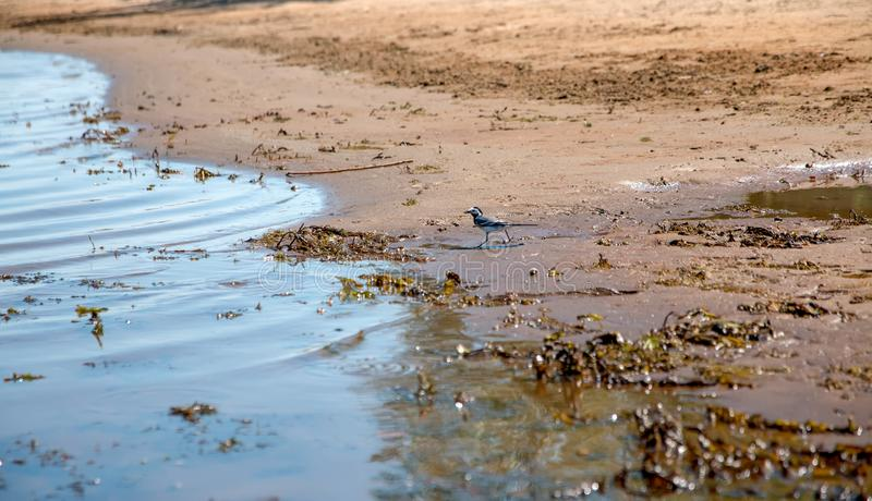 Un piccolo uccello sul fiume, banca di estate immagini stock
