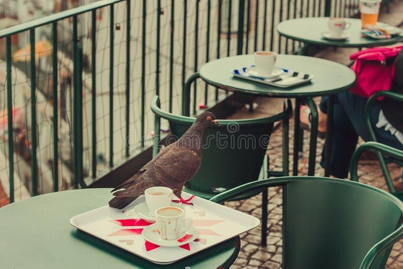 Un pigeon dans une table image stock