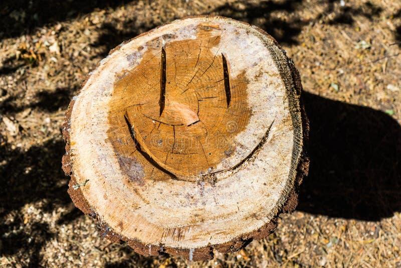 Un pin coupé en parc avec une émoticône de sourire image stock