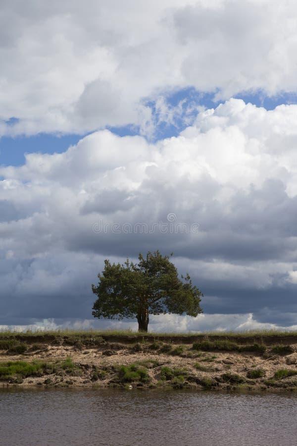 Un pin solitaire par la rivière images libres de droits