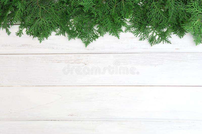 Un pino verde fresco va, Arborvitae orientale, orientali del thuja fotografia stock libera da diritti