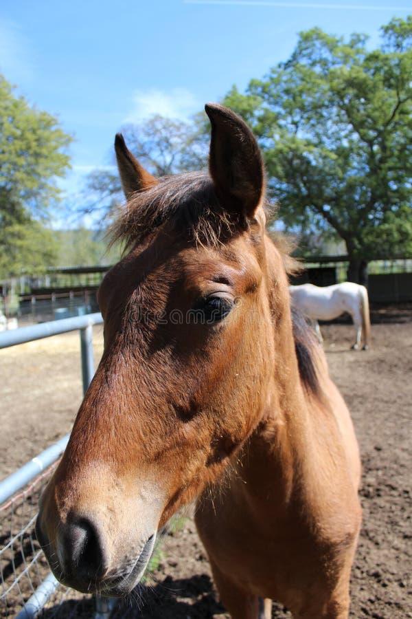 Un plan rapproché d'un cheval images stock