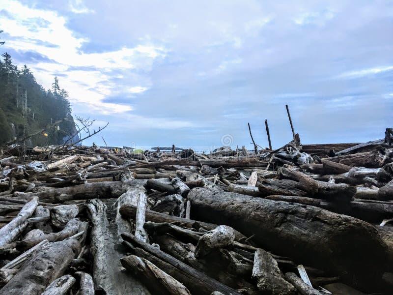 Un plan rapproché d'une pile massive de grand bois de flottage le long d'une plage à distance pendant la soirée sur la traîn images stock