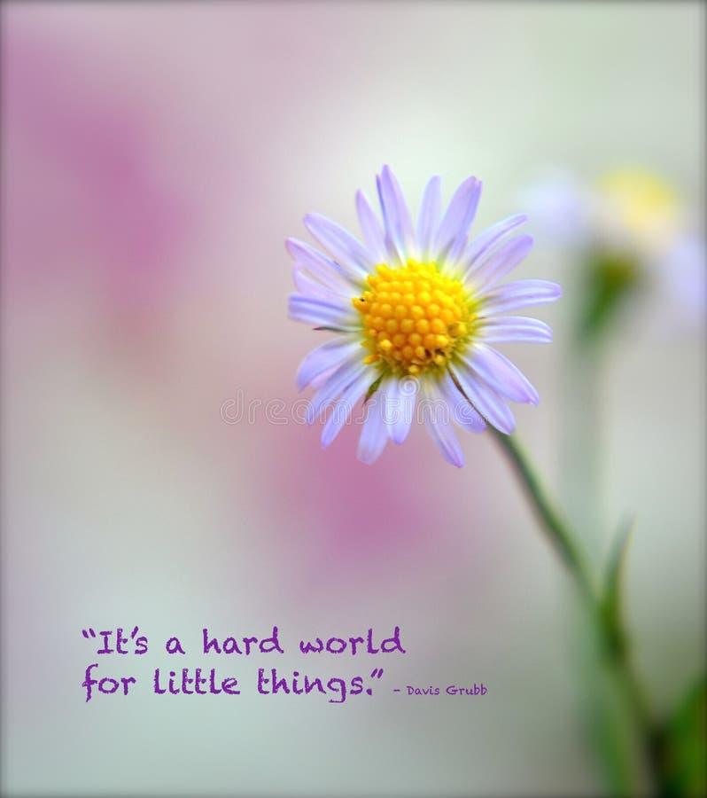 Un plan rapproché minuscule de fleur de mauvaise herbe avec le foyer et le détail mous avec la citation inspirée par Davis Grubb photo libre de droits