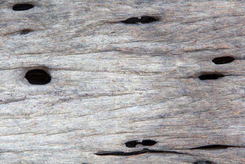 Un plan rapproch? de la surface de la vieille coupe de l'arbre, texture d'un vieil arbre, bois, table, tron?on, milieux photo stock