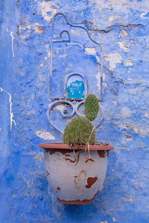 Un planteur accrochant avec un cactus sur un mur bleu dans Chefchaouen Maroc photos libres de droits