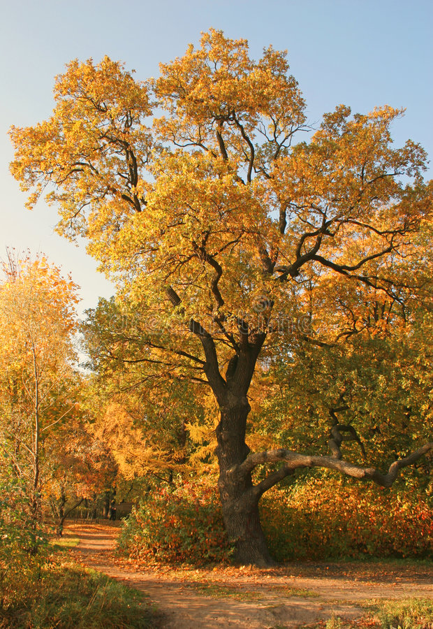 Un plus d'automne photos stock