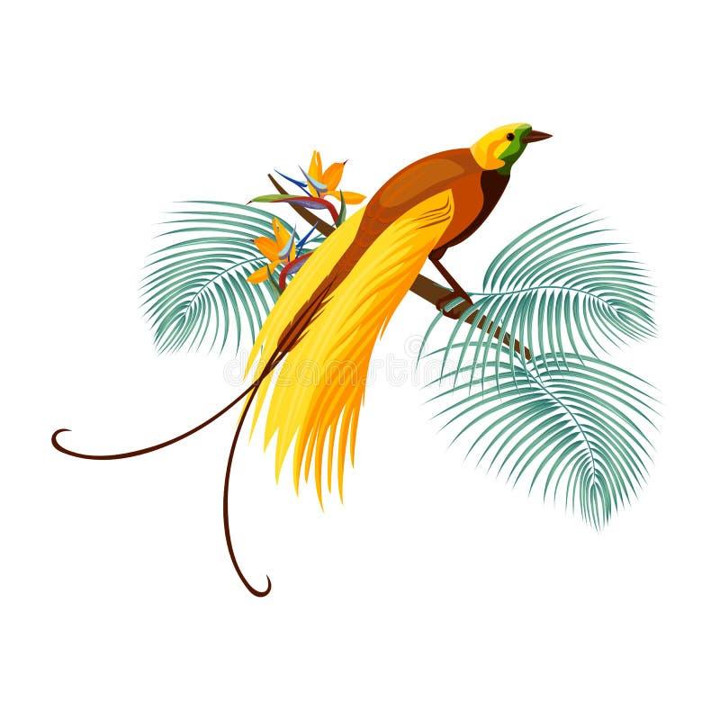 Un plus grand oiseau-de-paradis avec la queue jaune se reposant sur la branche illustration de vecteur