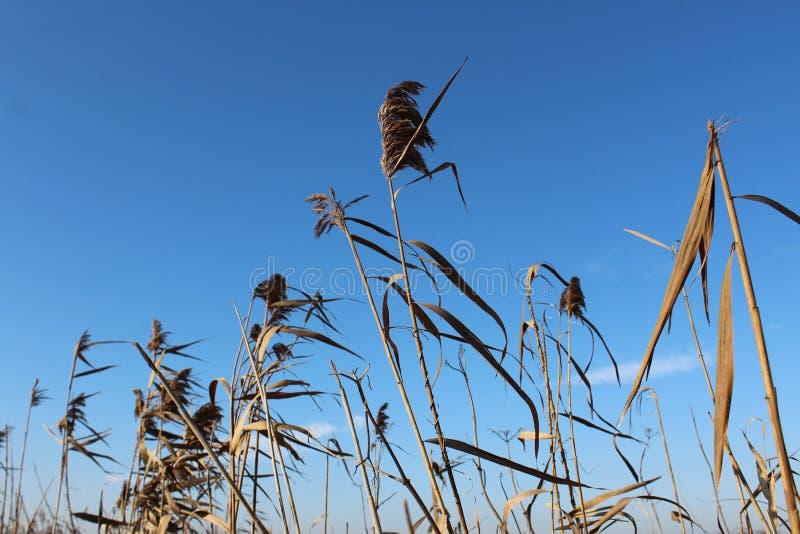 Un poco de bastón con el cielo azul imágenes de archivo libres de regalías