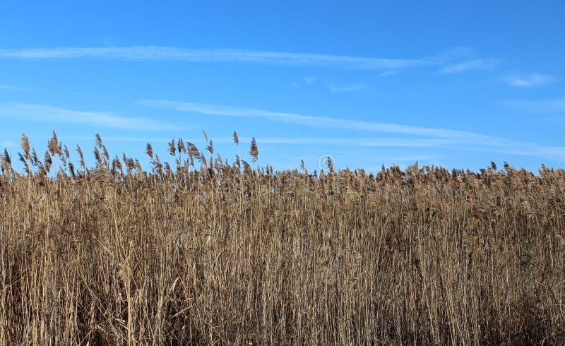 Un poco de bastón con el cielo azul fotos de archivo libres de regalías