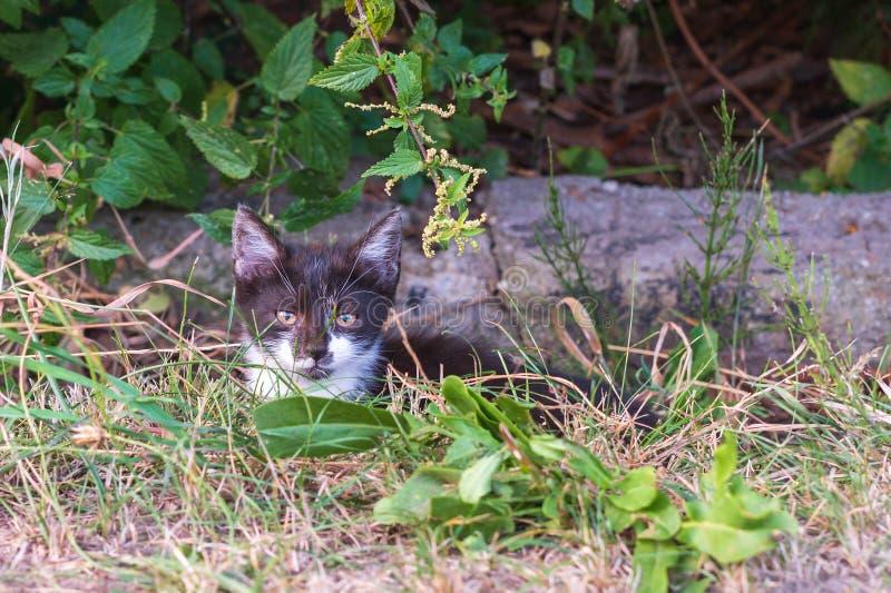 Un poco gato en un viaje del descubrimiento foto de archivo libre de regalías
