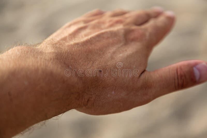 Un poco insetto sulla mia mano fotografia stock