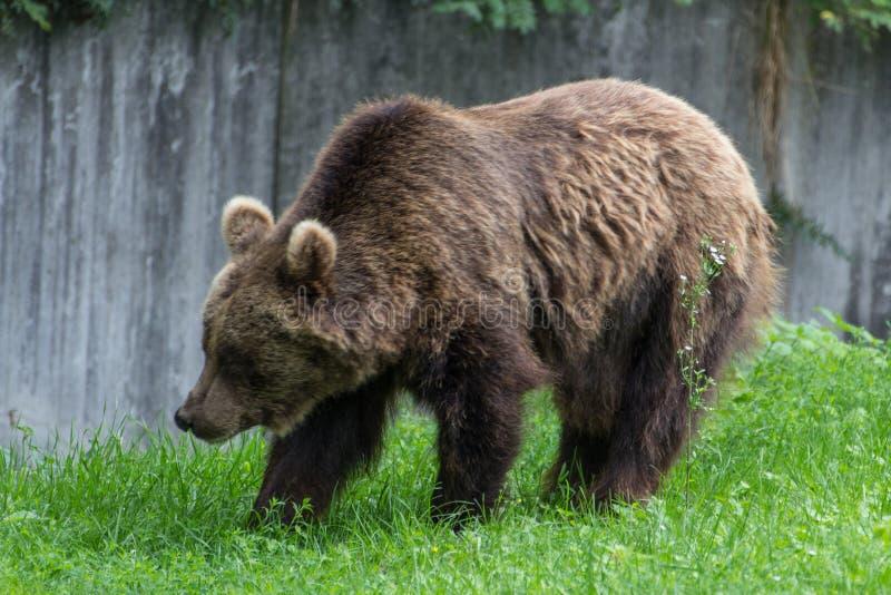 Un poco orso immagine stock