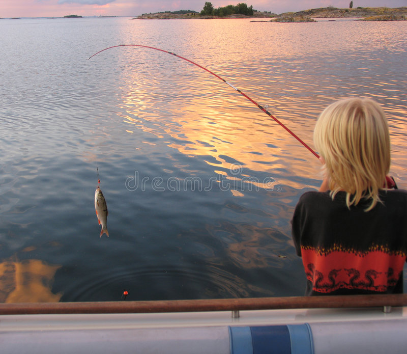 Un poisson photographie stock libre de droits