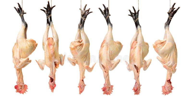 Un pollo nero crudo dei piedi pronto per cucinare immagine stock libera da diritti