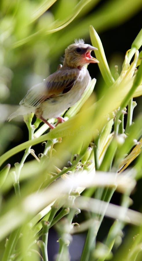 Un polluelo que cae en una flor fotografía de archivo libre de regalías