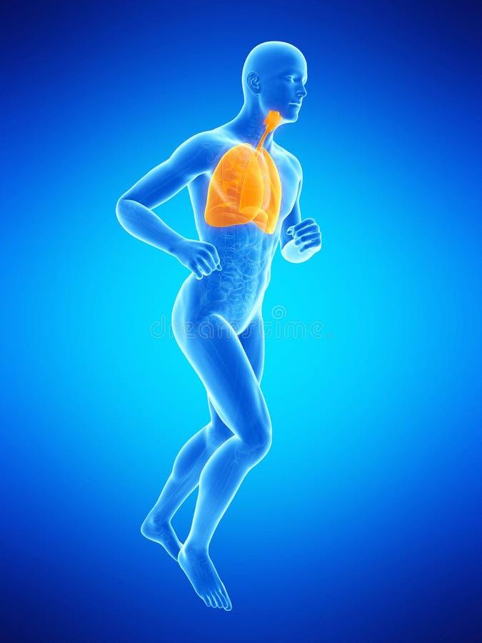 un polmone dei joggerillustrazione di stock