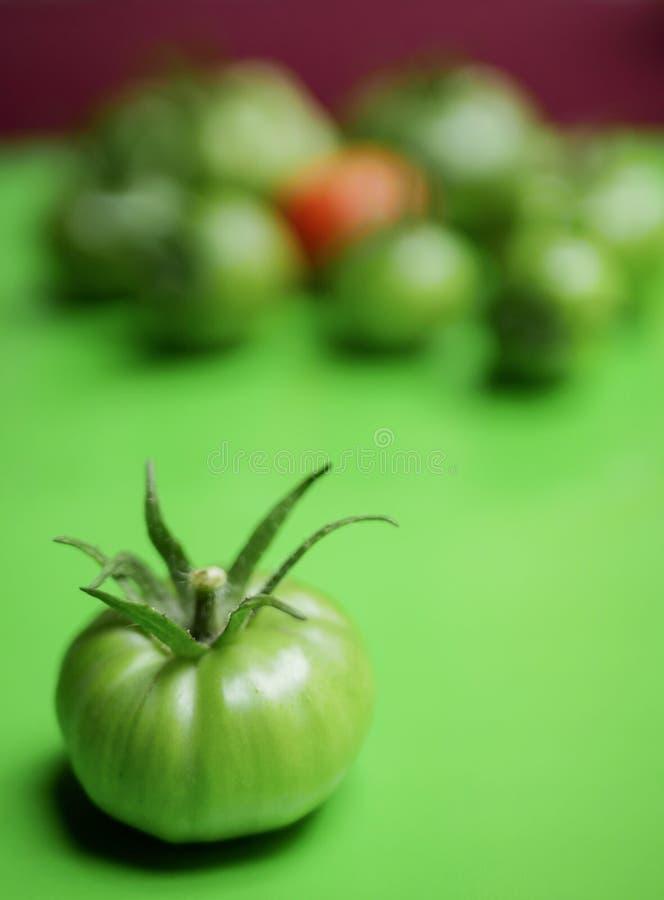 Un pomodoro verde fotografie stock