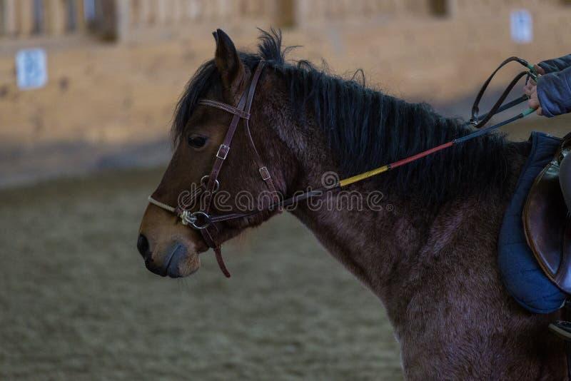 Un poney à l'écurie photo stock