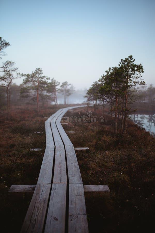 Un ponte di legno stretto lungo che passa attraverso gli alberi fotografia stock