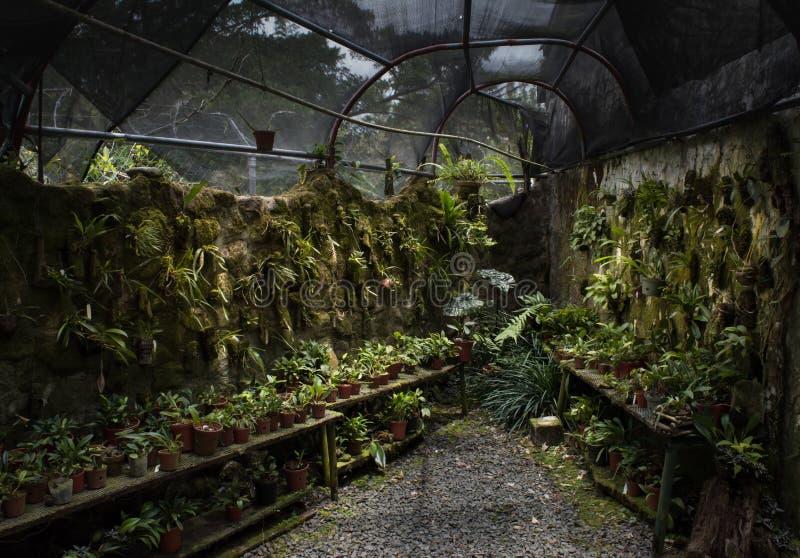 Un porto della serra della pietra del ` s del giardiniere fotografia stock libera da diritti