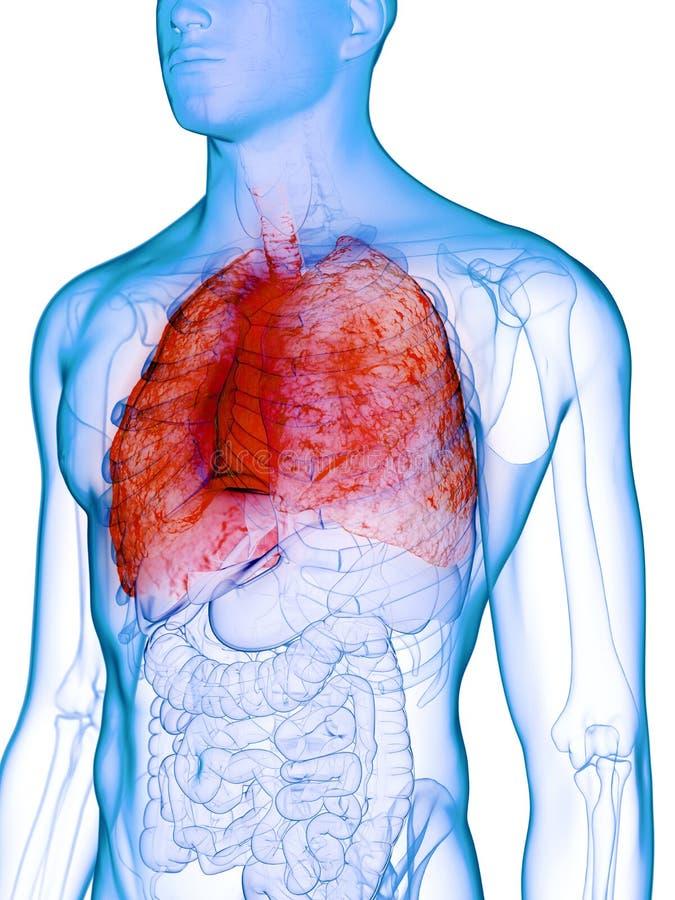 Un poumon malade illustration stock