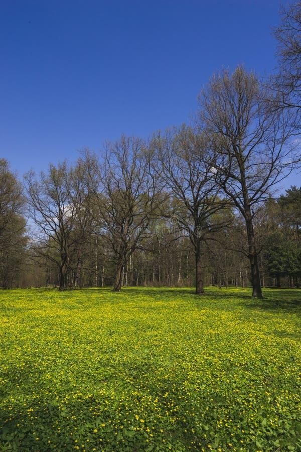 Un pré de floraison en parc au printemps photo libre de droits