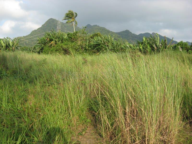 Un pré et des arbres tropicaux près de San Isidro, ville de Lipa, Philippines images stock