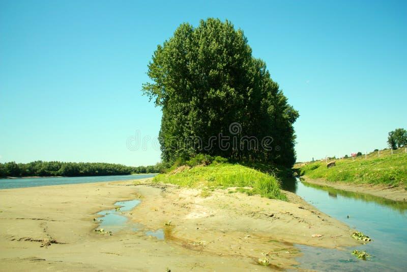 Un pré sur le Danube photos libres de droits