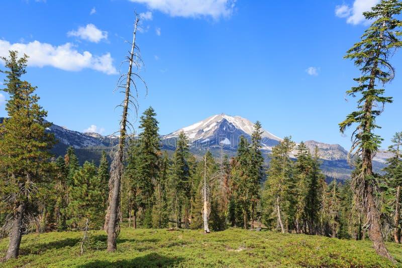 Un prado con los árboles de pino estropeados por el fuego scraggly enmarca la cordillera capsulada nieve de la cascada fotos de archivo