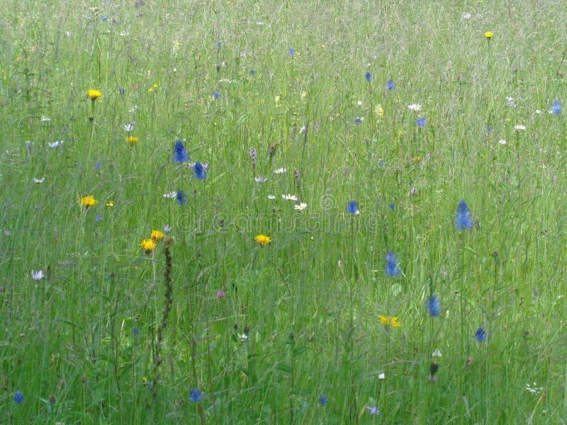 Un prado de heno de la montaña con las flores foto de archivo libre de regalías
