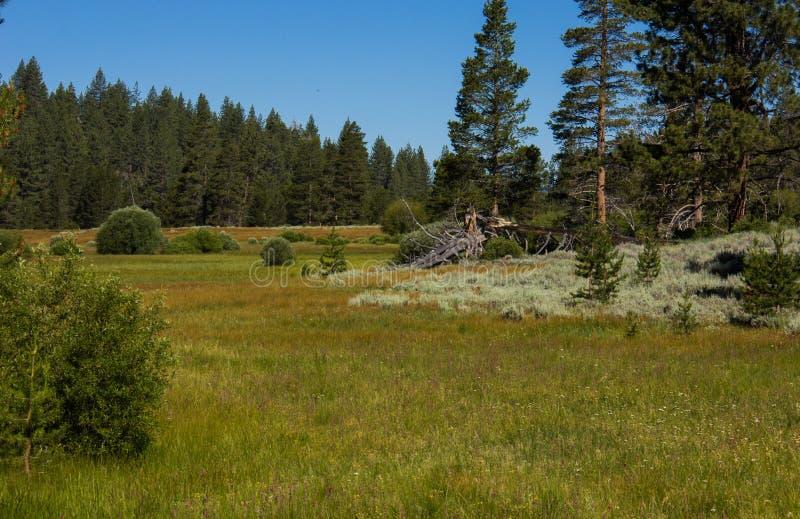 Un prado en el camino al lago Marlette en el lago Tahoe foto de archivo